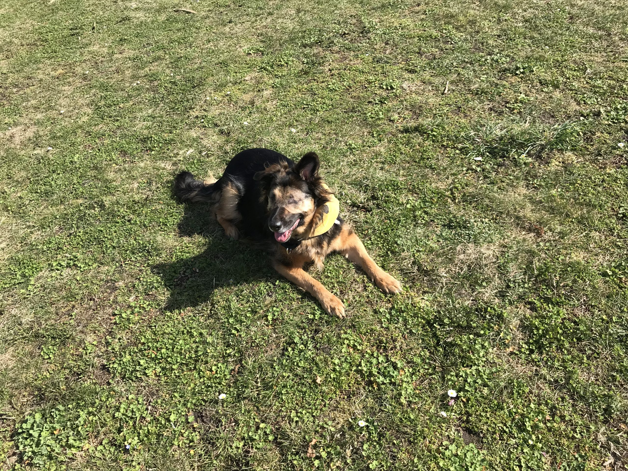 Ebby glücklich im Park Bild 1
