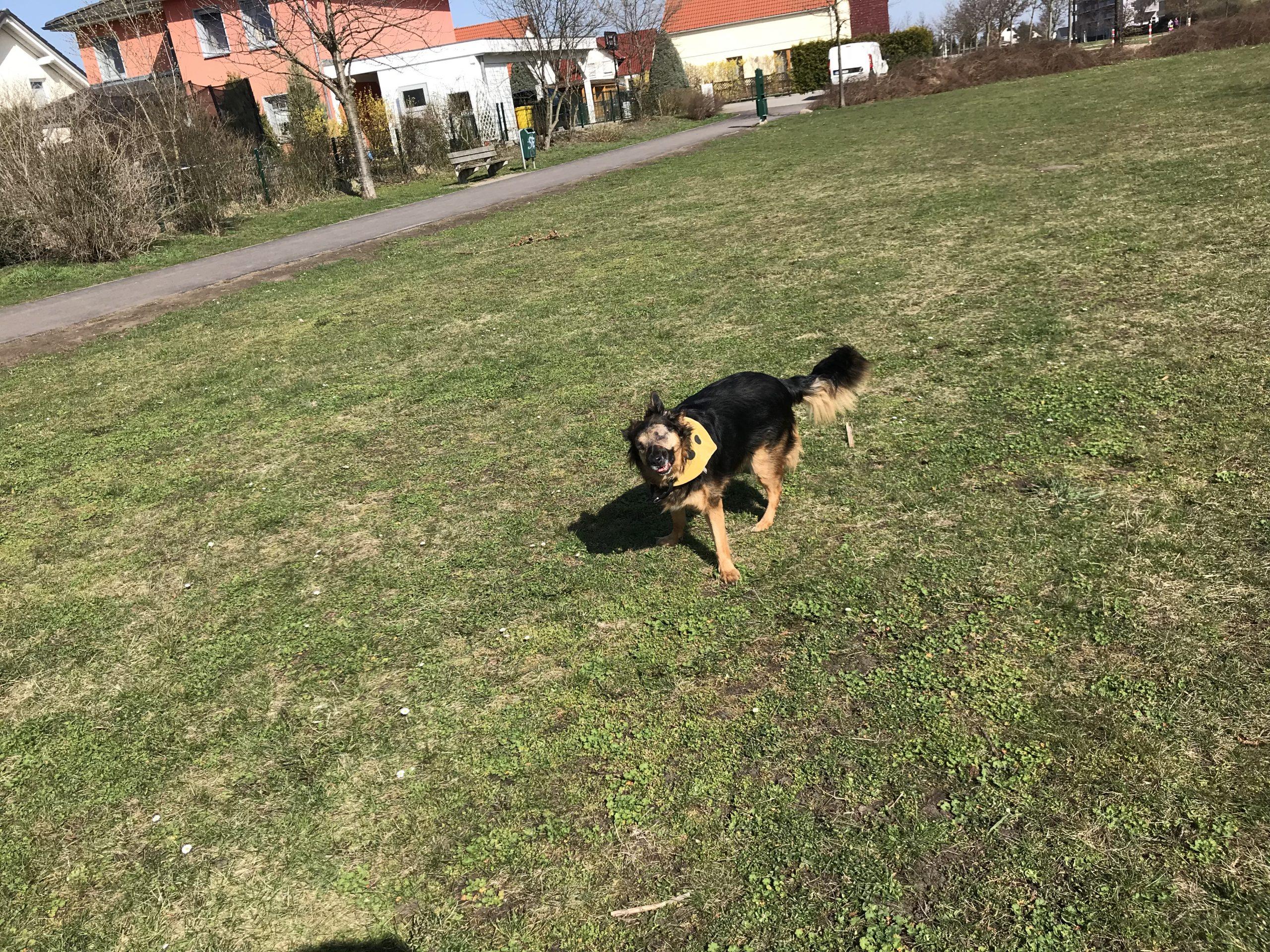 Ebby glücklich im Park Bild 3
